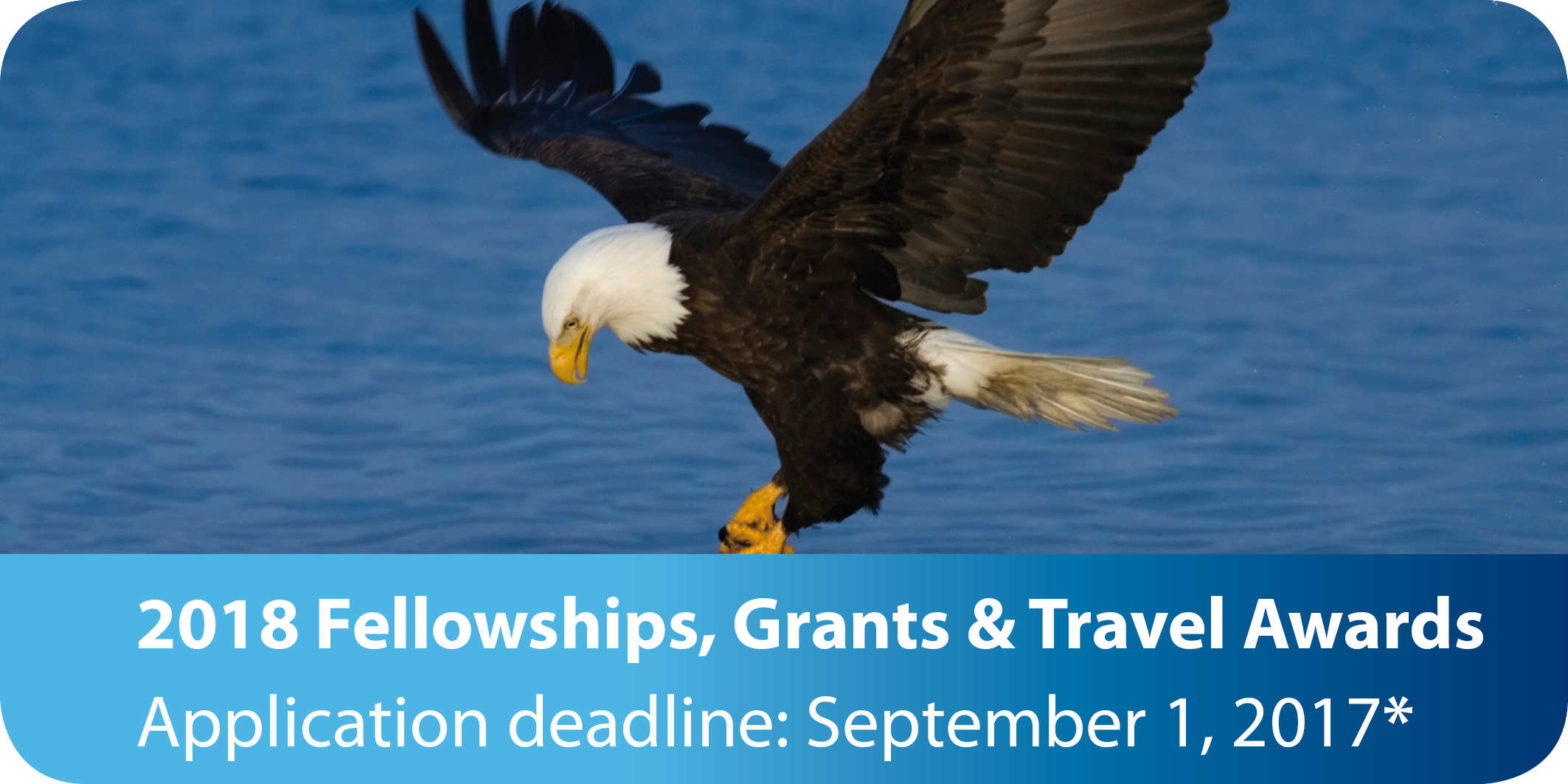 Fellowships, grants and travel awards
